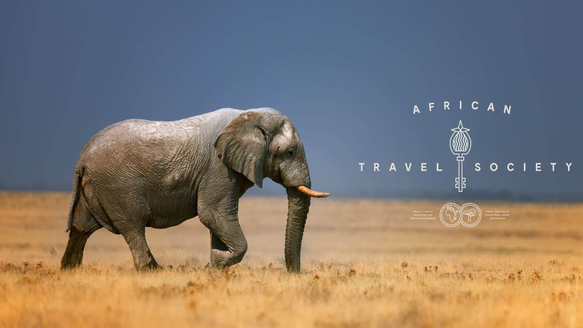 Elephant Bull Pintoafrica.com