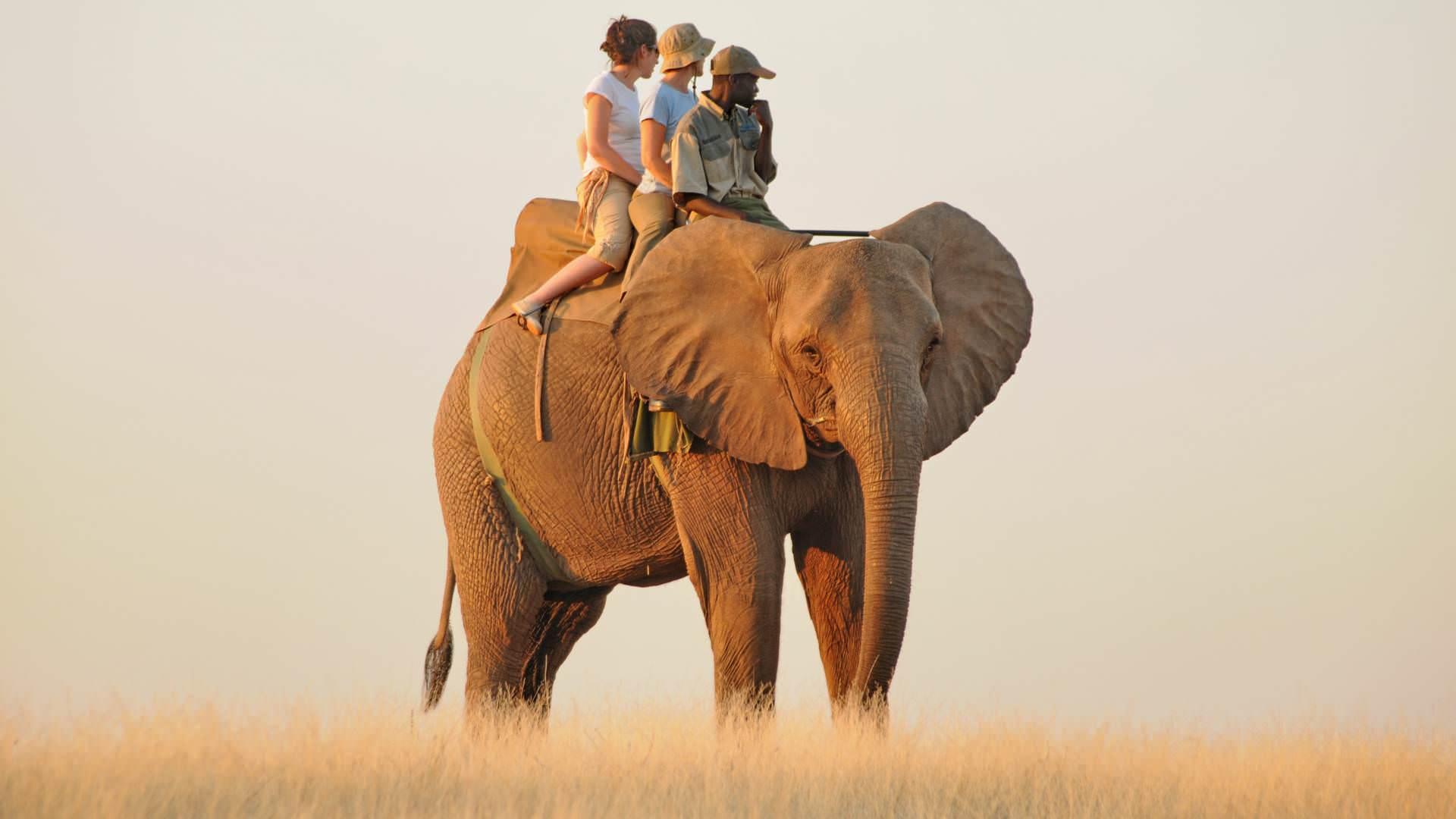 Elephant back safari wild horizons victoria fälle