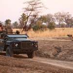 Game drive south luangwa with Norman Carr Safaris